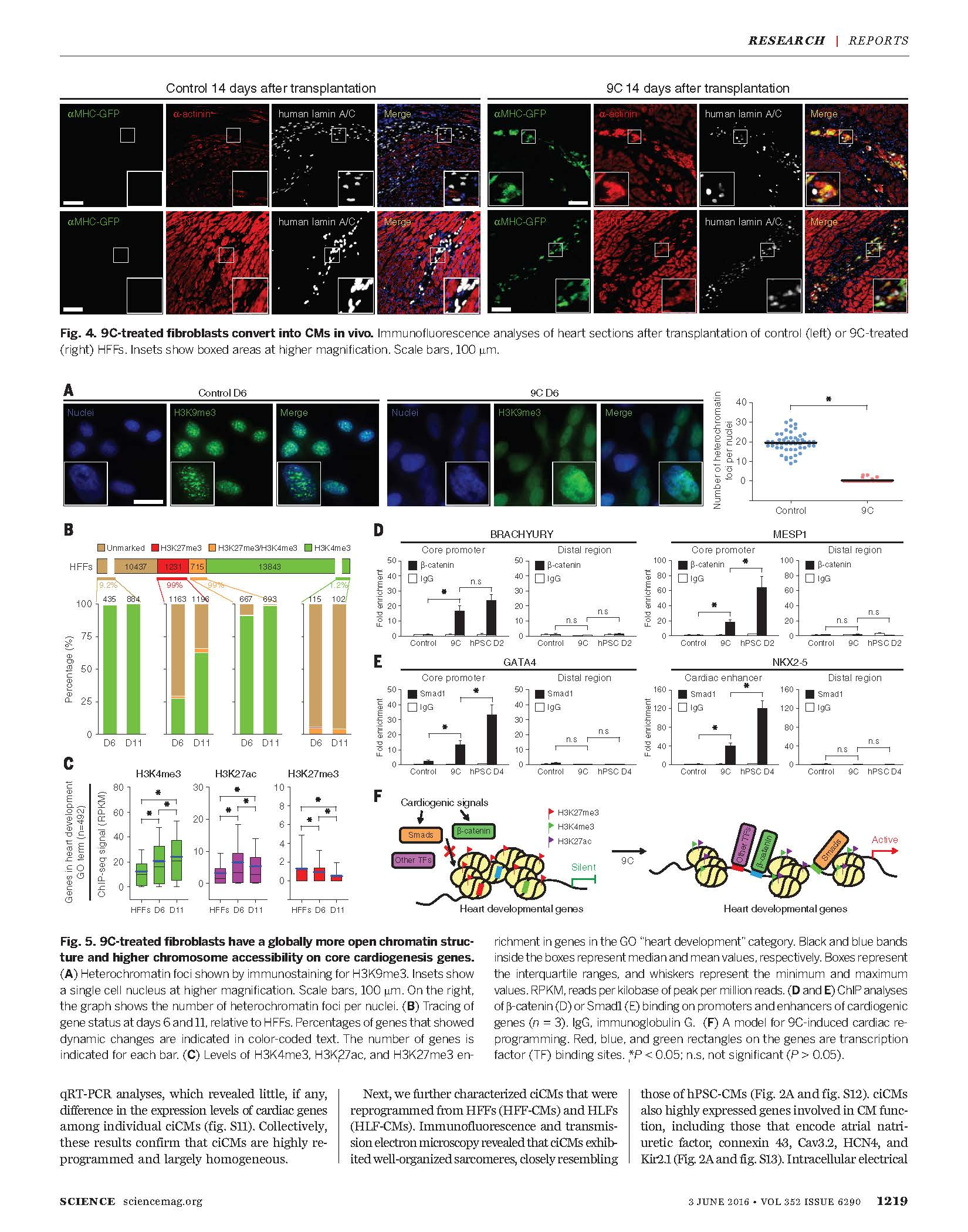 Conversion-of-human-fibroblasts-into-functional-cardiomyocytes-by-small-molecules-4.jpg