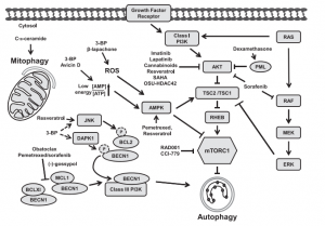 Molecular targets of anticancer agents in the autophagy-activating upstream pathways